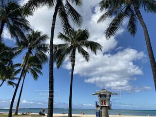 ハワイ 気持ちのいいハワイの写真・画像素材[4771102]