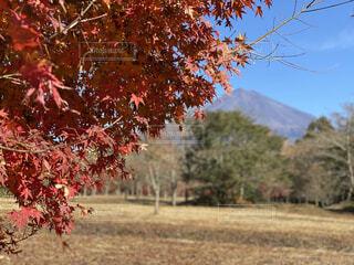 富士山と紅葉の写真・画像素材[4814165]