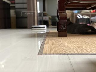 動く掃除機と猫の写真・画像素材[4819741]