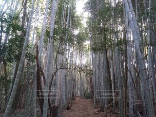 森林,木,屋外,樹木,竹,草木