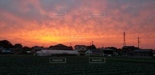 風景,空,屋外,雲,夕暮れ,草,日の出