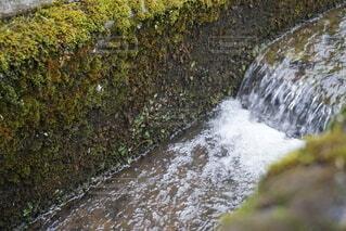 苔と水路の写真・画像素材[4766971]