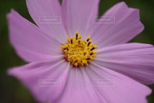 花のクローズアップの写真・画像素材[4767083]