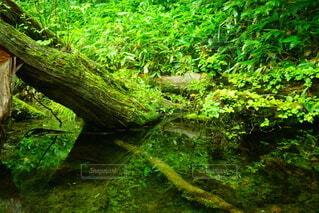 水面をはさんだ世界の写真・画像素材[4769375]
