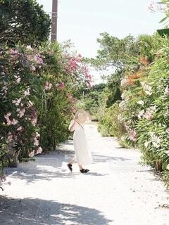 花がたくさん咲いた竹富島の景色の写真・画像素材[4767697]