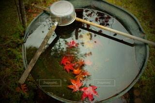 手水舎に沈む紅葉の写真・画像素材[4774366]