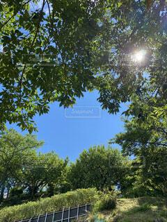 青空と木の写真・画像素材[4768391]