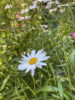 花のクローズアップの写真・画像素材[4770626]