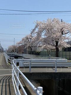 春のとある1日の写真・画像素材[4770674]