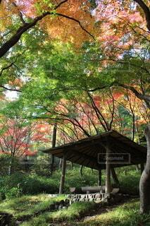 紅葉を見ながら休憩の写真・画像素材[4812293]