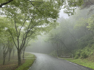 霧雨の道の写真・画像素材[4770248]