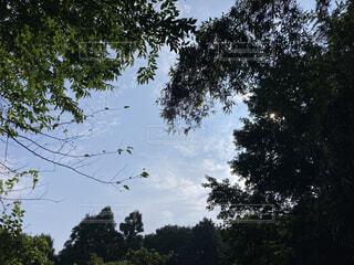 雨上がりの森からの写真・画像素材[4785518]