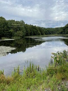 池の写真・画像素材[4770454]