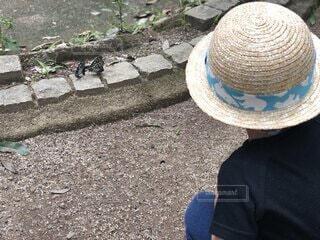 蝶々見つけた麦わら帽子の写真・画像素材[4770544]