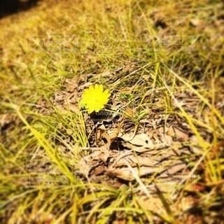 春の訪れの写真・画像素材[4770649]