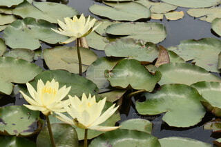 池のクローズアップの写真・画像素材[4778806]