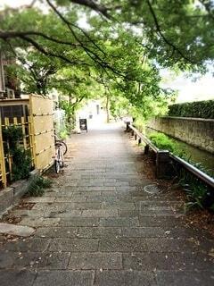 京都の小道に癒しを求めての写真・画像素材[4770781]