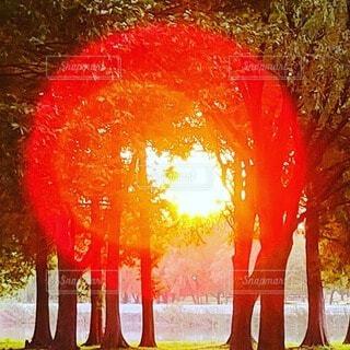 屋外,太陽,朝日,木漏れ日,樹木,朝陽