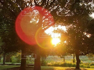 空,屋外,太陽,朝日,日光,木漏れ日,樹木,朝陽