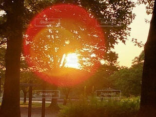 自然,空,屋外,太陽,朝日,樹木,朝陽,サンライズ