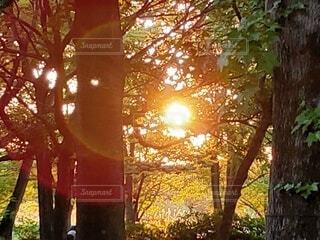 森の中の太陽の写真・画像素材[4777398]