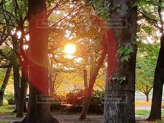自然,公園,森林,屋外,太陽,森,日光,木漏れ日,草,樹木,草木