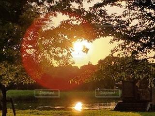 自然,空,森林,屋外,太陽,水面,水辺,池,樹木