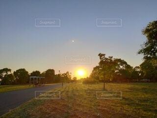 自然,風景,空,夕日,屋外,太陽,緑,夕焼け,草,樹木,夕陽,夕景,サンセット,夕刻,街路灯