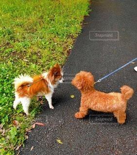 犬,動物,屋外,草,地面,お散歩,こんにちは,小犬
