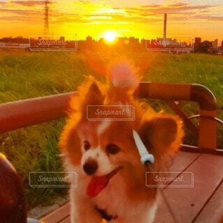 犬,風景,動物,屋外,朝日,ベンチ,景色,朝焼け,朝,朝陽,お散歩,サンシャイン,サンライズ