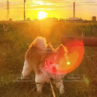 風景,空,動物,屋外,朝日,景色,草,朝焼け,朝,朝陽,お散歩,草むら,サンシャイン,サンライズ