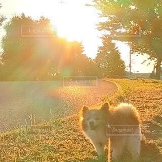 風景,動物,屋外,太陽,朝日,ウォーキング,オレンジ,草,朝焼け,樹木,立つ,朝,朝陽,お散歩,サンシャイン,サンライズ