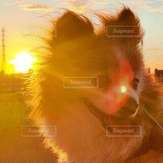 犬,風景,動物,太陽,朝日,景色,オレンジ,朝焼け,朝陽,サンシャイン,サンライズ,小犬