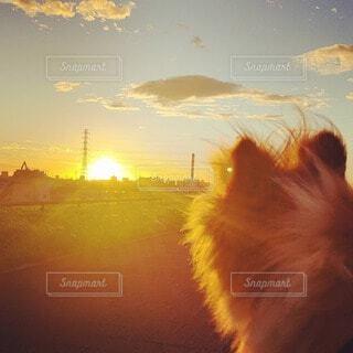 犬,風景,空,屋外,太陽,朝日,雲,日の出,朝陽,サンライズ,朝焼けの空
