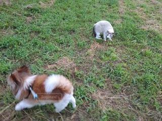 犬,猫,動物,屋外,緑,白,景色,草,ペット,子犬,草むら