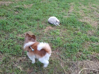 犬,猫,動物,屋外,景色,草,ペット,草むら