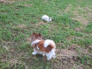 犬,猫,動物,屋外,白,景色,草,ペット,草むら