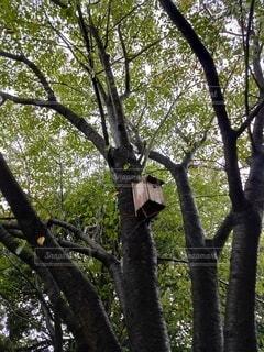 森の中の鳥の巣の写真・画像素材[4794102]