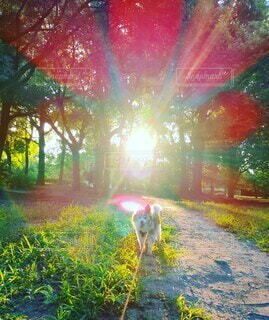 朝陽に照らされる小犬の写真・画像素材[4794166]