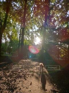 自然,秋,屋外,日光,樹木,地面
