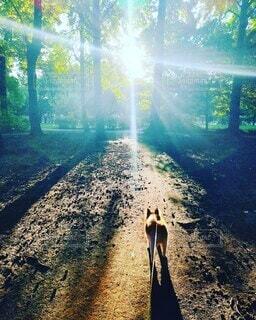 森の中の小犬と朝陽の写真・画像素材[4794184]