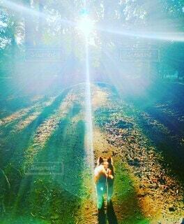 森林,太陽,朝日,森,林,木漏れ日,光,土,パピヨン,朝陽,お散歩,陽射し,サンシャイン,小犬