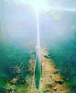 森の中、小犬と朝日の写真・画像素材[4794181]
