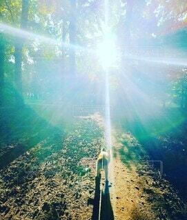 自然,屋外,太陽,朝日,水面,木漏れ日,光,樹木,パピヨン,朝陽,草木,サンシャイン,光彩,小犬,ひかりの輪