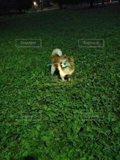 夜のお散歩の写真・画像素材[4796775]