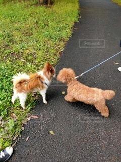 小犬の挨拶の写真・画像素材[4799464]
