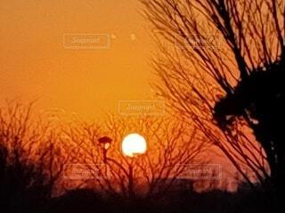 自然,風景,空,夕日,屋外,太陽,夕焼け,夕暮れ,シルエット,樹木,夕陽,夕景,サンセット,夕暮れ時,夕刻,日没前