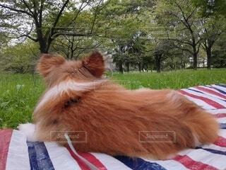 犬の森林浴の写真・画像素材[4802935]