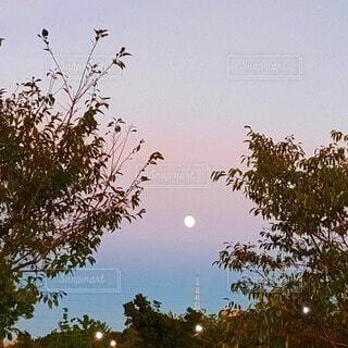 自然,空,屋外,夕方,樹木,月,満月,月夜,草木