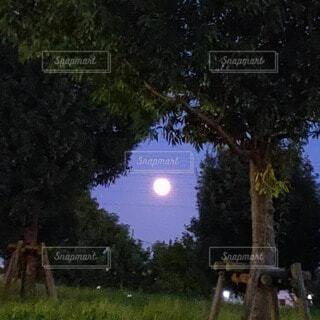 自然,空,夜,夜空,屋外,草,樹木,月